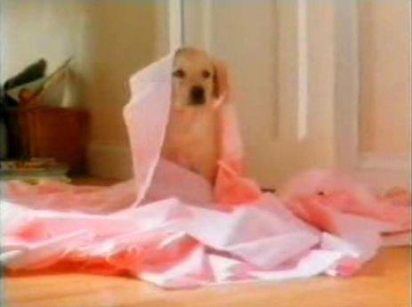 Still of a puppy from Andrex's 1994 TV advert.
