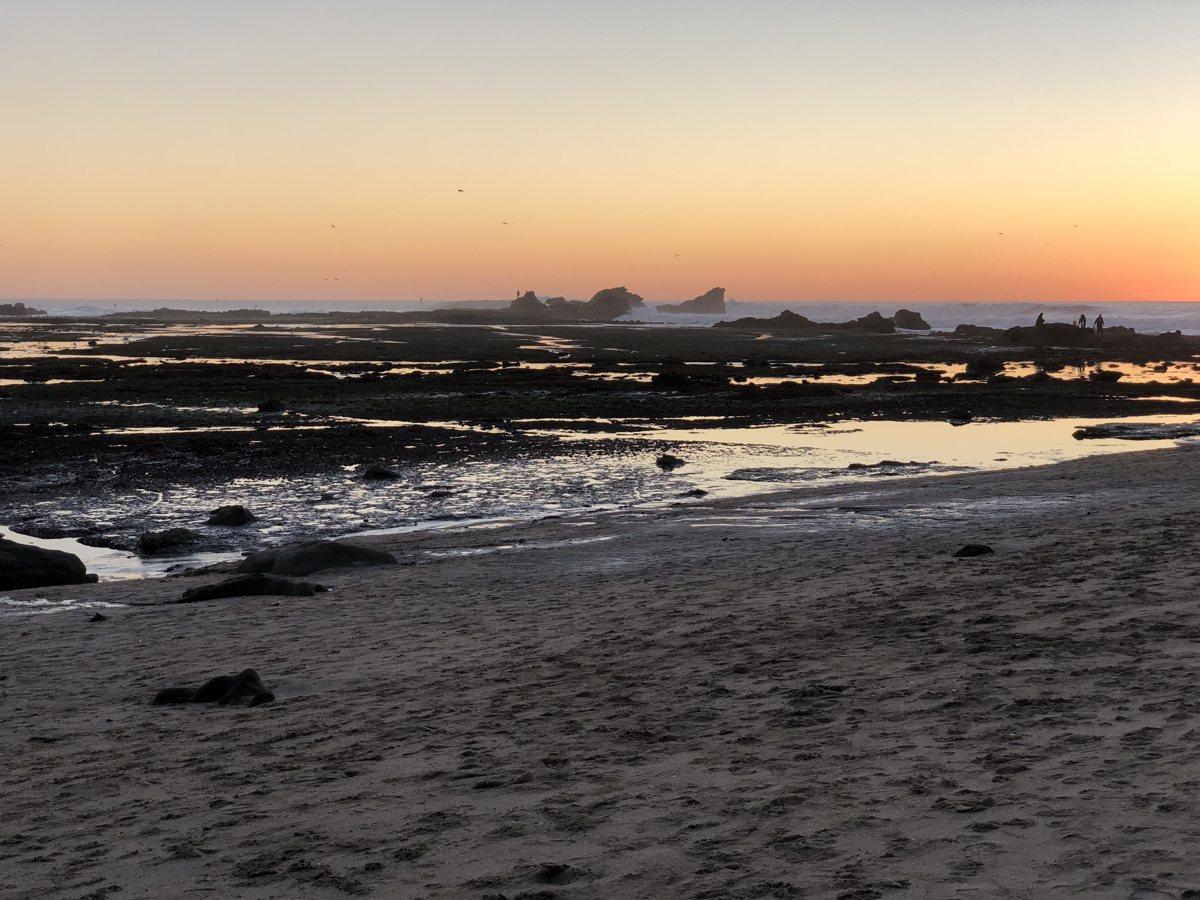 photo of Pillar Point tidepools